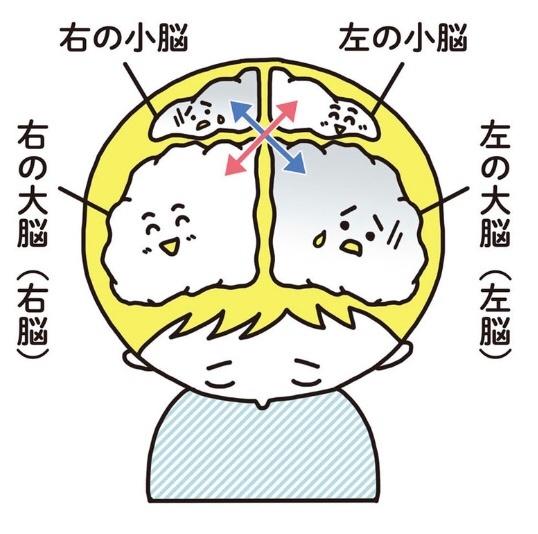 右脳 と 左脳 の 働き
